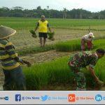 TNI Cilacap Bantu Petani Tanam Padi